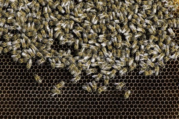 Сток-фото: многие · пчел · соты · природы · рабочих
