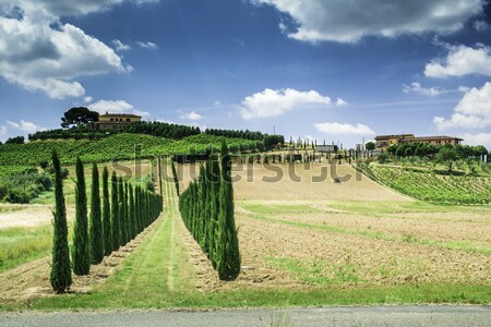 Vineyards and farm road in Italy Stock photo © deyangeorgiev