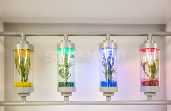 Plants grown in test tubes Stock photo © deyangeorgiev