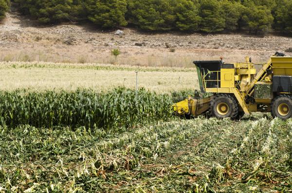 Milho verde paisagem verão trigo outono Foto stock © deyangeorgiev