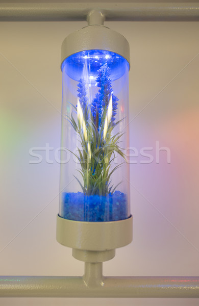 Planten gegroeid test laboratorium technologie Stockfoto © deyangeorgiev