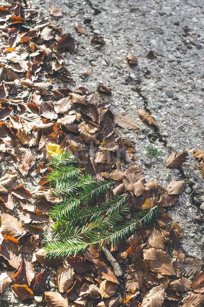 Kiefer Herbstlaub Miniatur Frühling Holz Herbst Stock foto © deyangeorgiev
