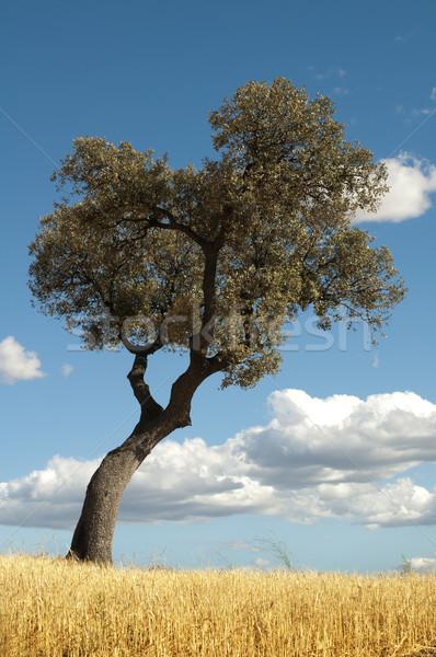 Drzewo niebieski mętny niebo żywności lasu Zdjęcia stock © deyangeorgiev