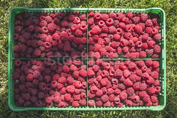 Maliny zielone skrzynia ogród owoców lata Zdjęcia stock © deyangeorgiev