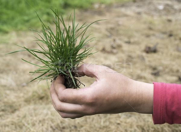 Tőzeg fű Föld kéz tart textúra Stock fotó © deyangeorgiev