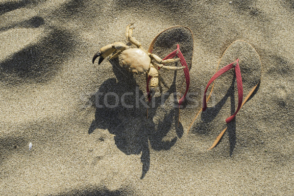 Slippers in the sand on the beach Stock photo © deyangeorgiev