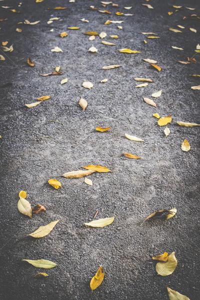 Outono folha calçada escuro textura cidade Foto stock © deyangeorgiev