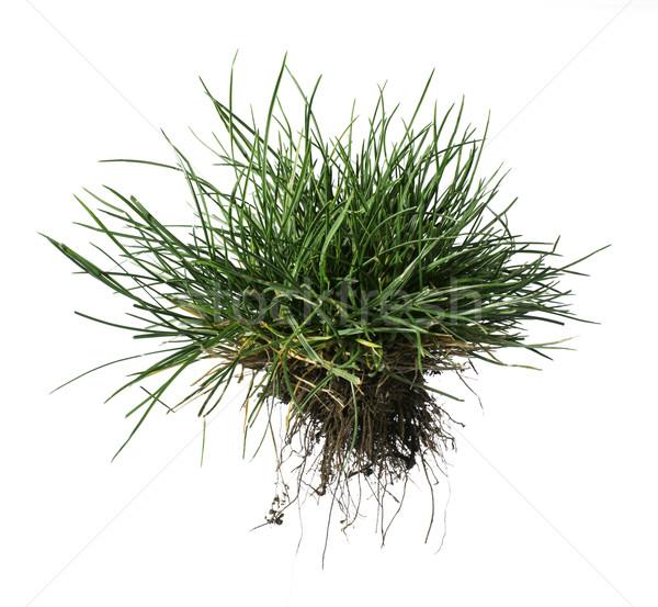 Turf grass and earth Stock photo © deyangeorgiev