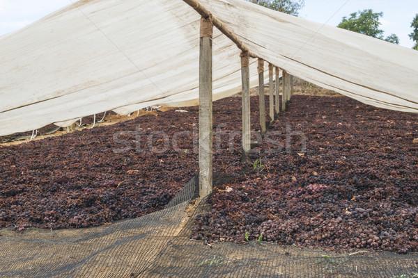 Szőlő mazsola természet étel gyümölcs háttér Stock fotó © deyangeorgiev