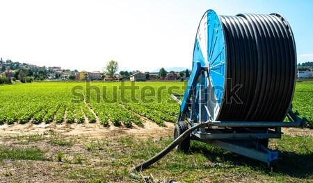 Hose for watering the land Stock photo © deyangeorgiev