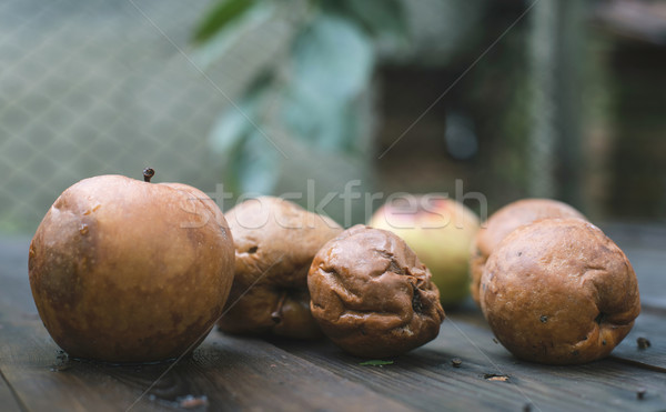 Rotten apples on wood Stock photo © deyangeorgiev