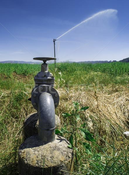 Mezőgazdasági öntözés locsoló csövek természet kert Stock fotó © deyangeorgiev