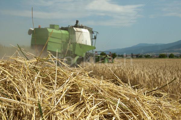 Tractor and combine harvesting Stock photo © deyangeorgiev