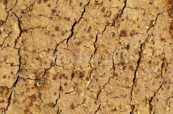Cork crust Stock photo © deyangeorgiev