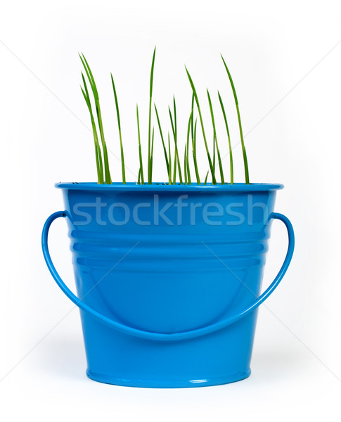 Young potted plants Stock photo © deyangeorgiev