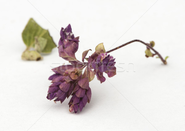 Dried oregano seasoning Stock photo © deyangeorgiev