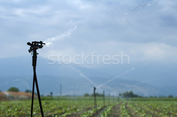 Irrigation Stock photo © deyangeorgiev