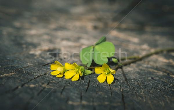 黄色の花 木材 小 花 テクスチャ ツリー ストックフォト © deyangeorgiev