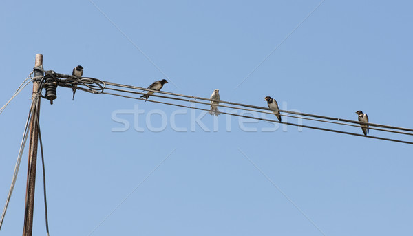 Birds on a wire. Concept of uniqueness and difference Stock photo © deyangeorgiev