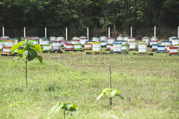 Beehives in bee farm Stock photo © deyangeorgiev