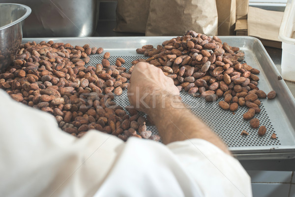 Hands sellect cocoa beans Stock photo © deyangeorgiev