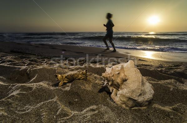 Stock photo: Sunrise on the beach. Shells