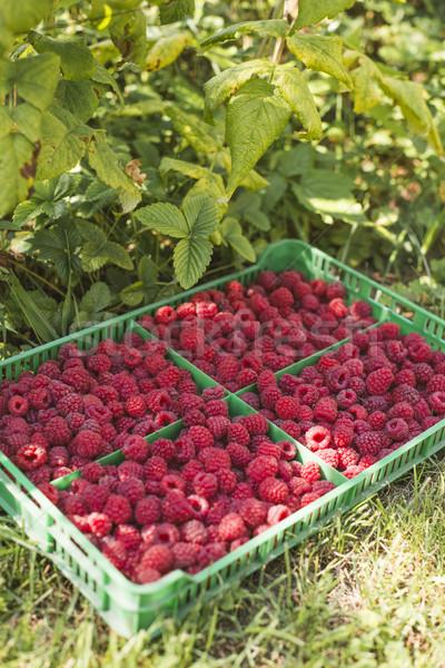 Raspberries in a green crate Stock photo © deyangeorgiev