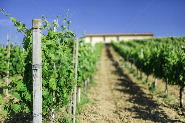 Vine plantations and farmhouse in Italy Stock photo © deyangeorgiev