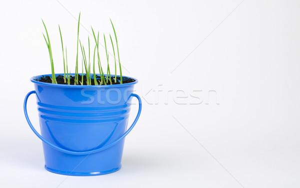 Young potted plants Stock photo © deyangeorgiev