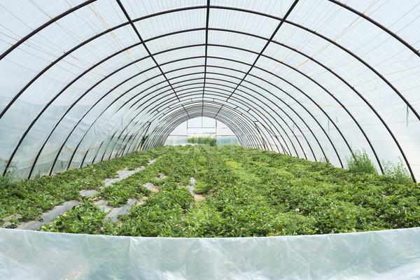 Foto d'archivio: Serra · foglia · verde · farm · interni · mercato
