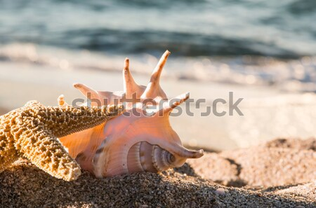 Stock photo: Shells on the beach