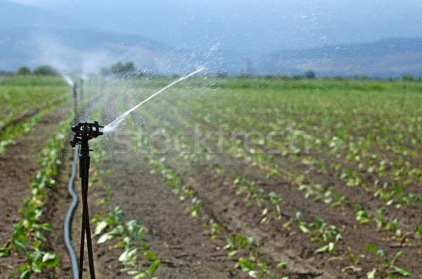 Irrigation Stock photo © deyangeorgiev