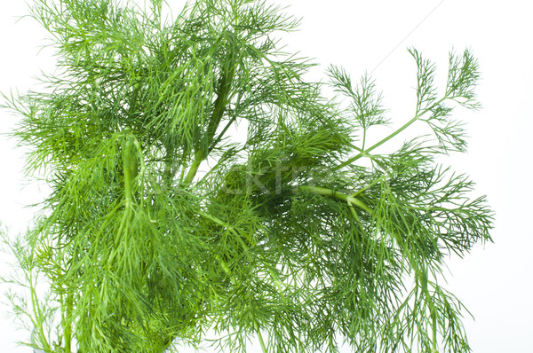 Fresh dill Stock photo © deyangeorgiev