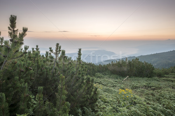 Sunrise in the mountain.  Stock photo © deyangeorgiev