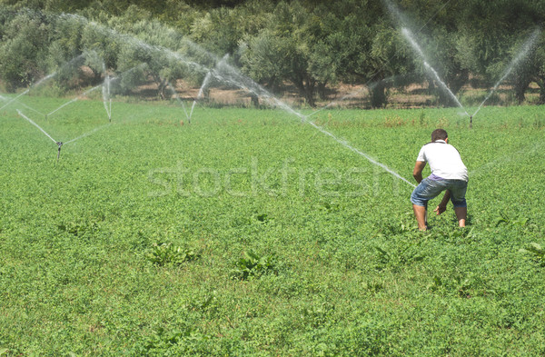 Stock photo: Irrigation systems