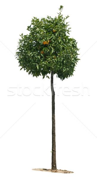 Narancsfa gyümölcsök fehér izolált levél gyümölcs Stock fotó © deyangeorgiev