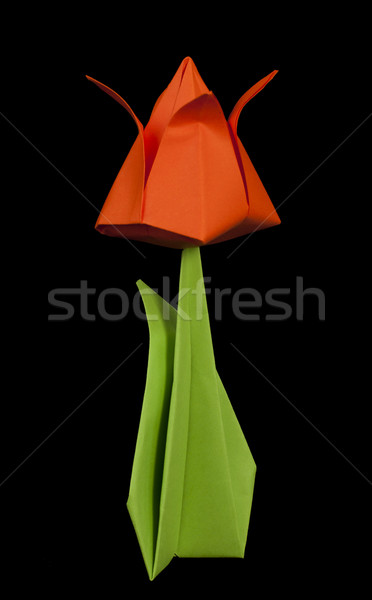 Red tulip isolated on black background Stock photo © deyangeorgiev