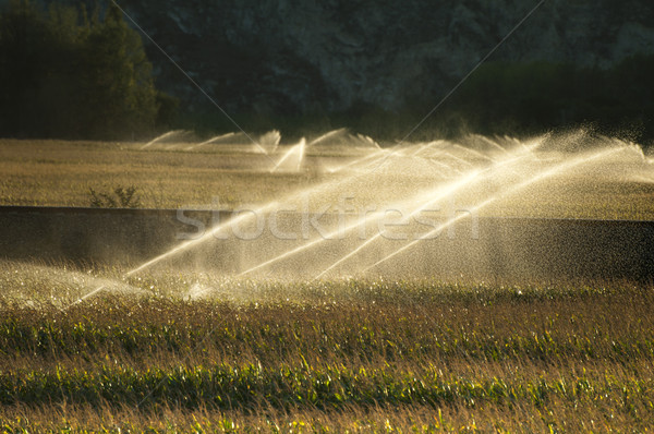 Irrigation systems on sunset Stock photo © deyangeorgiev