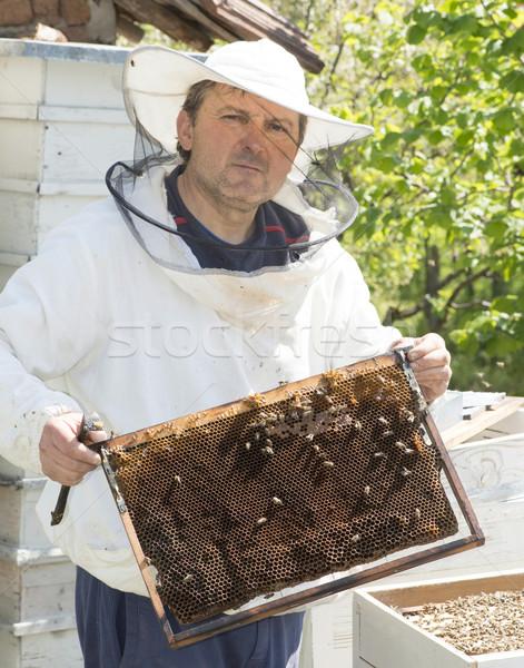 Beekeeper with honeycombs Stock photo © deyangeorgiev