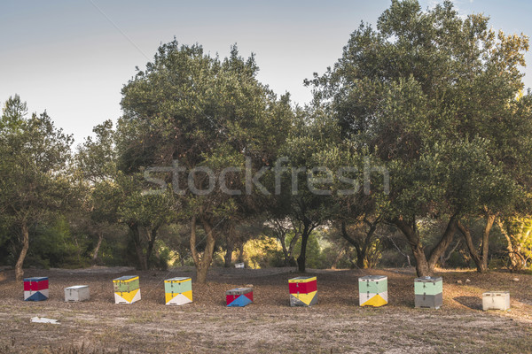 Colorful beehives Stock photo © deyangeorgiev