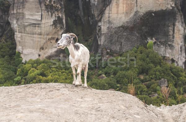 Goat climbs rocks Stock photo © deyangeorgiev