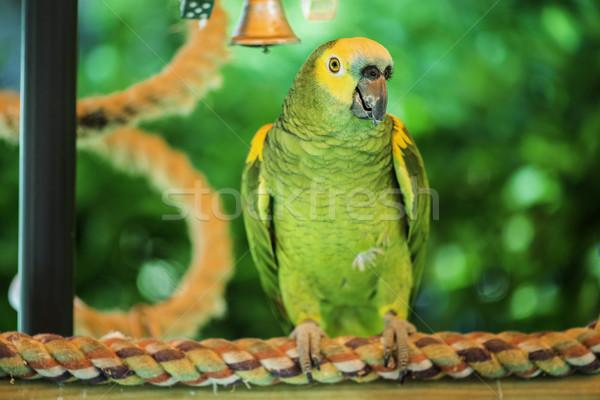 Grünen Papagei Natur Hintergrund Vogel Porträt Stock foto © deyangeorgiev