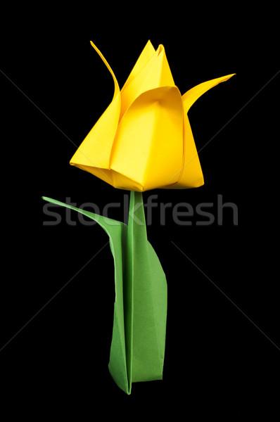 Yellow tulip isolated on black background Stock photo © deyangeorgiev