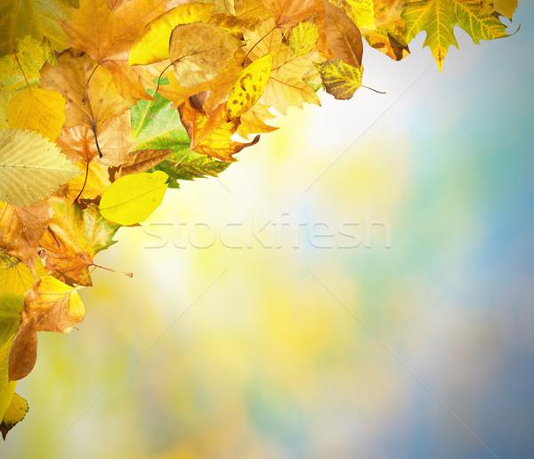 Foto stock: Frontera · hojas · de · otoño · otono · cielo · espacio · de · la · copia · textura
