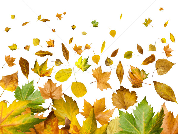 Border of autumn leaves Stock photo © deyangeorgiev