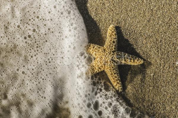 Zeester golven zonlicht strand water vis Stockfoto © deyangeorgiev