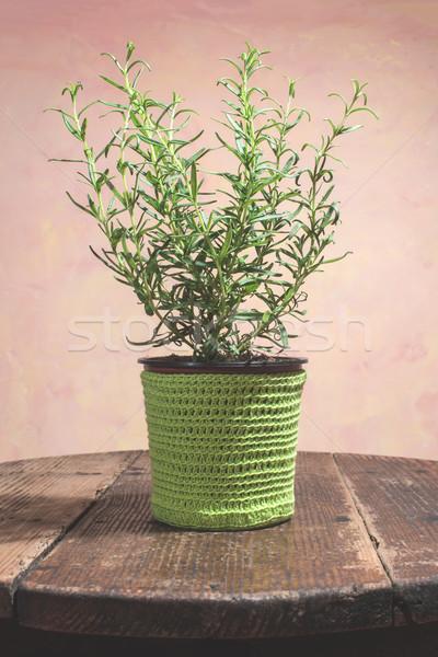 Rosemary twigs Stock photo © deyangeorgiev