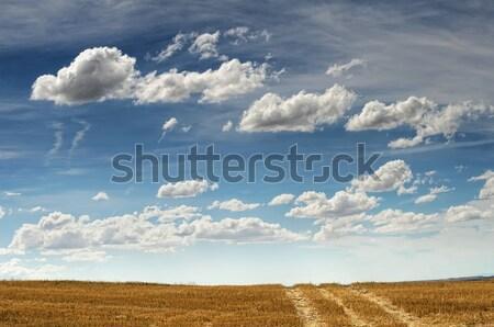 Rural road Stock photo © deyangeorgiev
