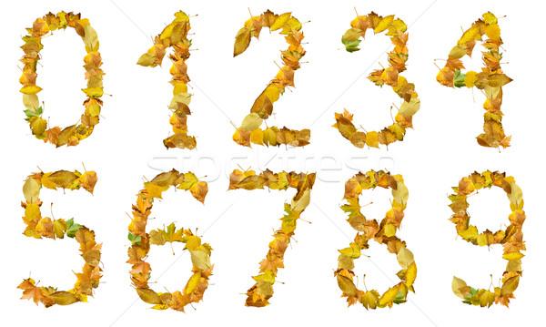 Foto stock: Establecer · números · hojas · de · otoño · blanco · aislado · textura
