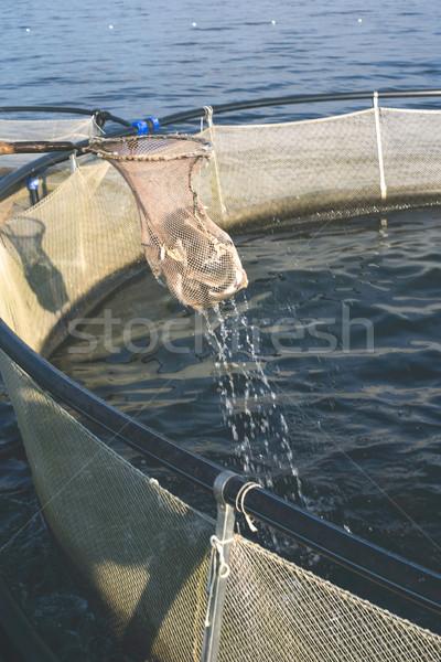 Vis landing net voedsel boot Stockfoto © deyangeorgiev